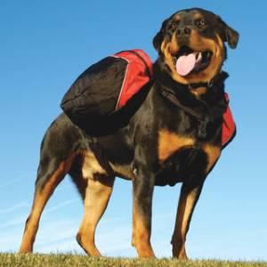 Dog Kennels In The Niagara Region