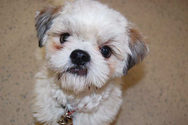 Niagara Puppy Mill Rescue Dogs Are Looking For Homes Rather Fetching